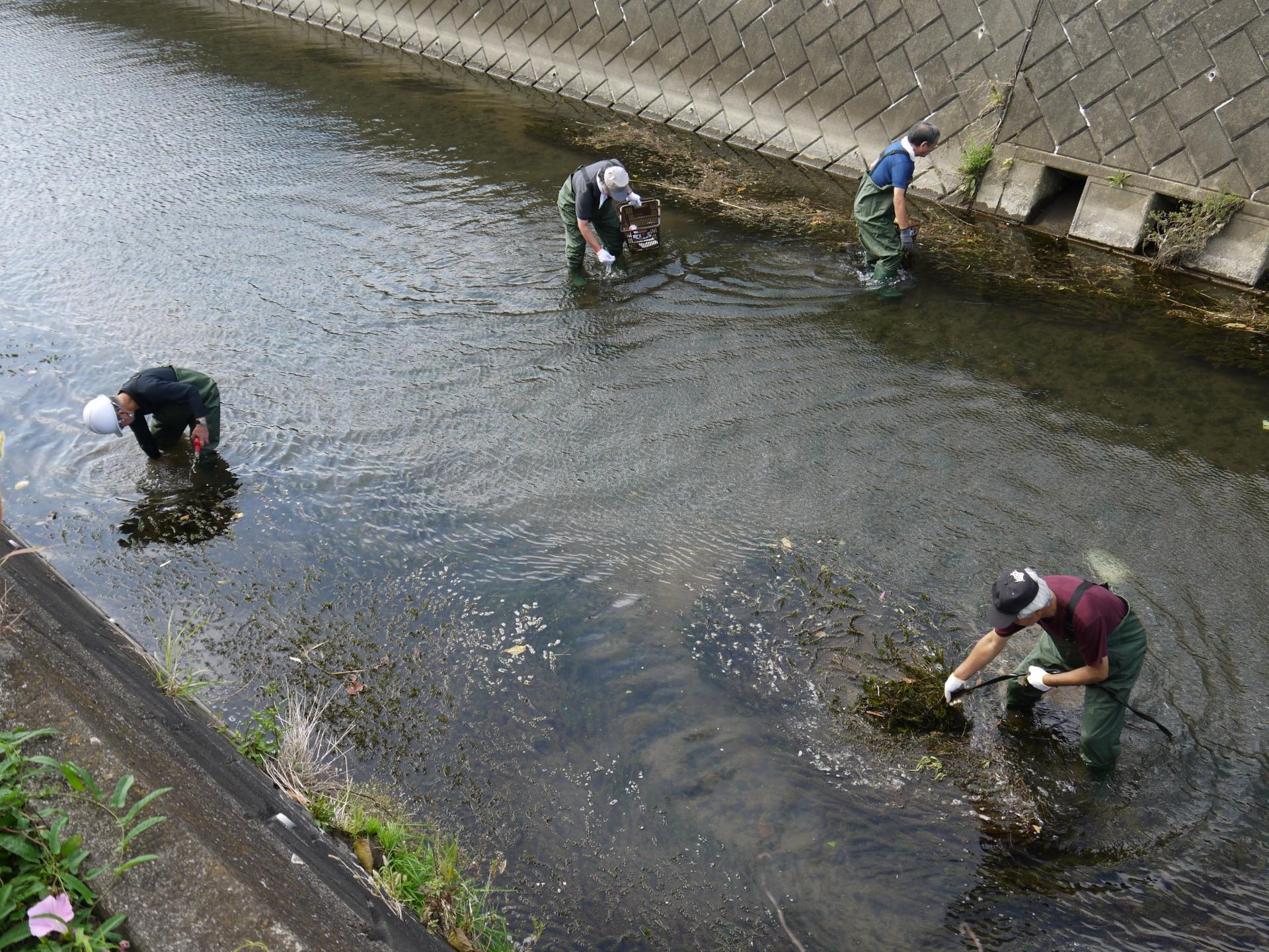 河川清掃の様子