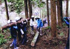 学校林の木の伐採の様子