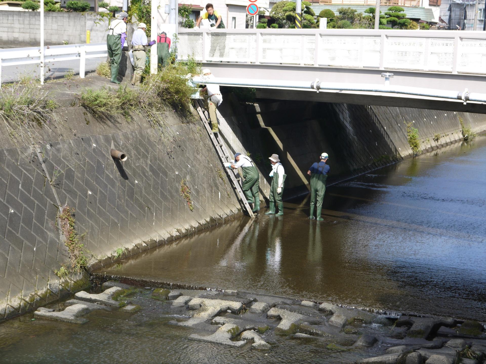 梯子を使って河川に降りていく様子