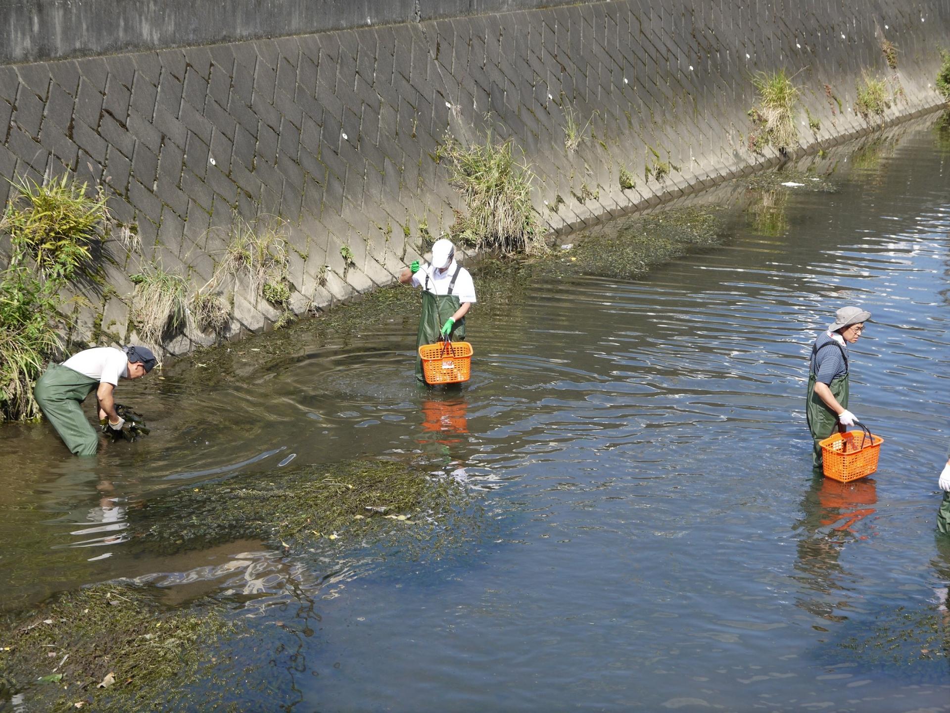 かごを使って水中のごみを集めている様子